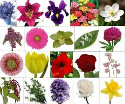 kinds of flowers with name and picture types of flowers and their meanings pictures reference image