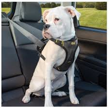 dog car seat belt attachment what is the best car harness for your