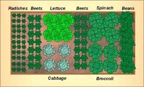 small vegetable garden designs vegetable design layout brilliant small vegetable layout small vegetable vegetable garden small