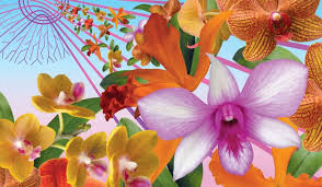 the annual orchid show is back this month at the new york botanical garden