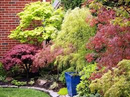 another view of layered Japanese maple border