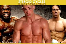 Steroid Cycle Chart Steroid Cycles Effects Results For Bulking Cutting 2019