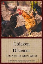 Chicken Disease Chart Chicken Diseases You Need To Know About Farming My Backyard