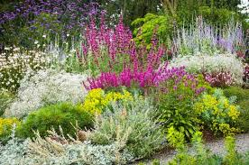 drought tolerant garden. Beat The Heat In Your Backyard With These 40+ Drought Resistant Flowers And Plants Recommended By Our Gardening Expert. Tolerant Garden I