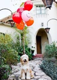 Pinterest Dogs Images Funny Cats 71 Best Birthdays And On Cute BZcXPq