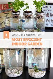 hydroponics saves 90 95 more water than soil gardening i grow herbs and salad with my mason jar aquaponics system my betta fish are happy and active in