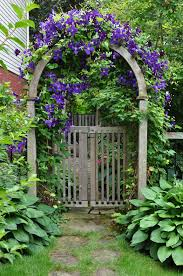 garden arbor with morning glory vines