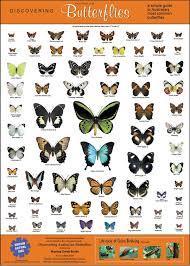 The Poster Australian Butterflies