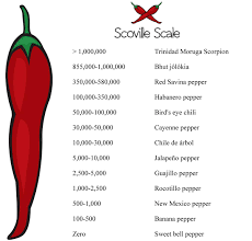 Chilli Hotness Chart Hotness Scale