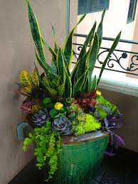 Small Picture Best 20 Potted plants ideas on Pinterest Potted plants patio