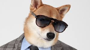 Menswear <b>Dog</b>, The Chic <b>Shiba</b>: Pet Pooch Models Designer <b>Fashion</b>
