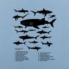 Shark Size Chart Shark Species Chart T Shirt 6 Dollar Shirts