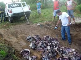 Policiais apreendem 129 quilos de carne de capivara em Soure