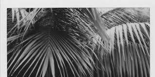 palm trees header Tumblr