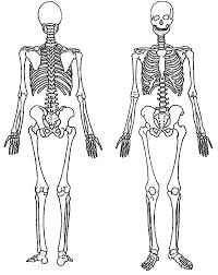 Small Picture Back and Front of a Skeleton Coloring Page Massage therapy