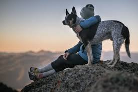 Bivvy is only available in 16 states: 2021 Bivvy Pet Insurance Review Pros Cons More Benzinga