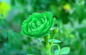 flores verdes tipos listado nombres