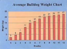American Bulldog Puppy Growth Chart Male English Bulldog Growth Chart Best Picture Of Chart