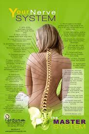 Back Nerve Chart Nerve Chart Pardun Family Chiropractic P C