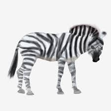 cartoon hand drawn chinese style watercolor painting watercolor zebra zebra png hand drawn zebra