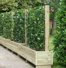 Free standing outdoor privacy screens Lattice Free Standing Privacy Screen In Planter Boxes First Site Pinterest Free Standing Privacy Screen In Planter Boxes First Site