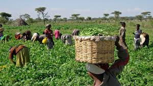 Image result for Stakeholders urge FG to invest Agric genetic research
