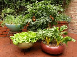 Small Picture Creative Vegetable Garden Designs hypnofitmauicom