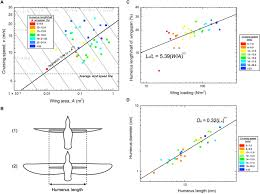 Scaling Of Bird Wings And Feathers For Efficient Flight