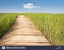 tall green grass field. Wooden Boardwalk Creates Path Through Field Of Tall Green Grass Leading To Blue Sky And Puffy White Cloud - Horizontal D