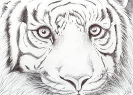 Wild drawing of animals Coloring Pages Drawings Of Animals Animal Kingdom Series Wild Cat Drawing Artists Network Drawings Of Animals Animal Kingdom Series Wild Cat Drawing