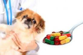 Over-the-Counter Medications That Are Safe for Dogs (And How Much to ...