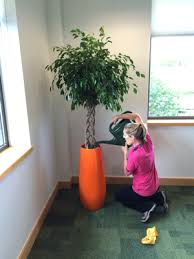 office plant displays. Rent Office Plants Plant Displays