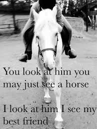Horseback Riding Quotes