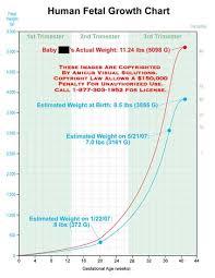 Human Fetal Growth Chart Medical Exhibits Demonstrative Aids Illustrations And Models