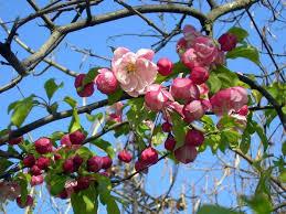 Картинки и и реферат про весну Дари весь мир Картинки и и реферат про весну