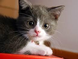 aahah beauty cat pic