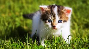 baby animals wallpapers. Delighful Animals Download Inside Baby Animals Wallpapers B