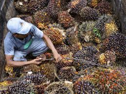 india cuts import tax on crude palm oil