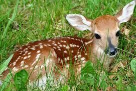 deer symbolism dreamessages