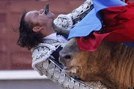bull fighting injuries. Perfect Fighting Bullfight Injury As Matador Gored Through Chin In Madrid Spain   NationalTurk Intended Bull Fighting Injuries B