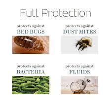 Types Of Bed Bugs Rome Fontanacountryinn Com