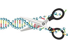 Genome Editing Facing The Ethical Challenges Of Genome Editing