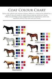 Pin On Pony Club Quiz