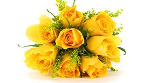 Roses Flowers Wallpapers Rose Flower Wallpaper Reviews Online Shopping Rose Flower 2560x1440
