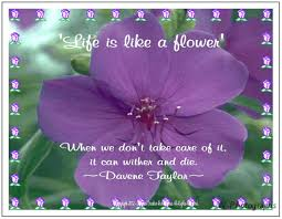 Purple Flower Quotes Quotes About Giving Flowers 45 Quotes