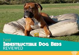 our 5 highest rated indestructible dog beds reviewed see our picks below