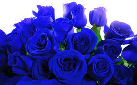 Blue Roses Wallpapers ...