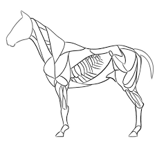 especially for realistic drawings drawing horse anatomy