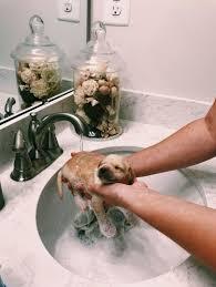 tiny good boy getting a clean