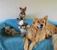 york dog. dogs for adoption york dog s